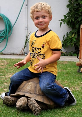 A little boy that is sitting on top of a turtle