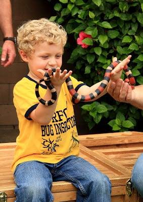 A little boy holding a snake