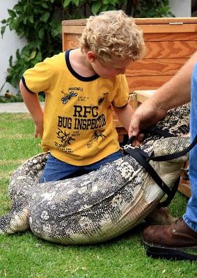 A little boy and an alligator