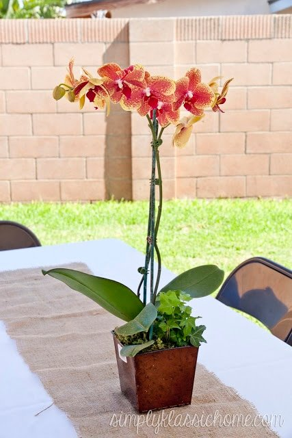 Orchid siting on outdoor table