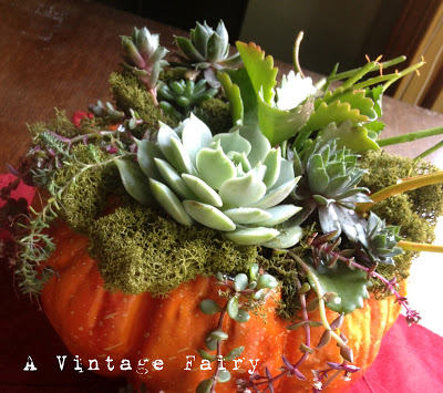 Pumpkin with succulents on top on a table