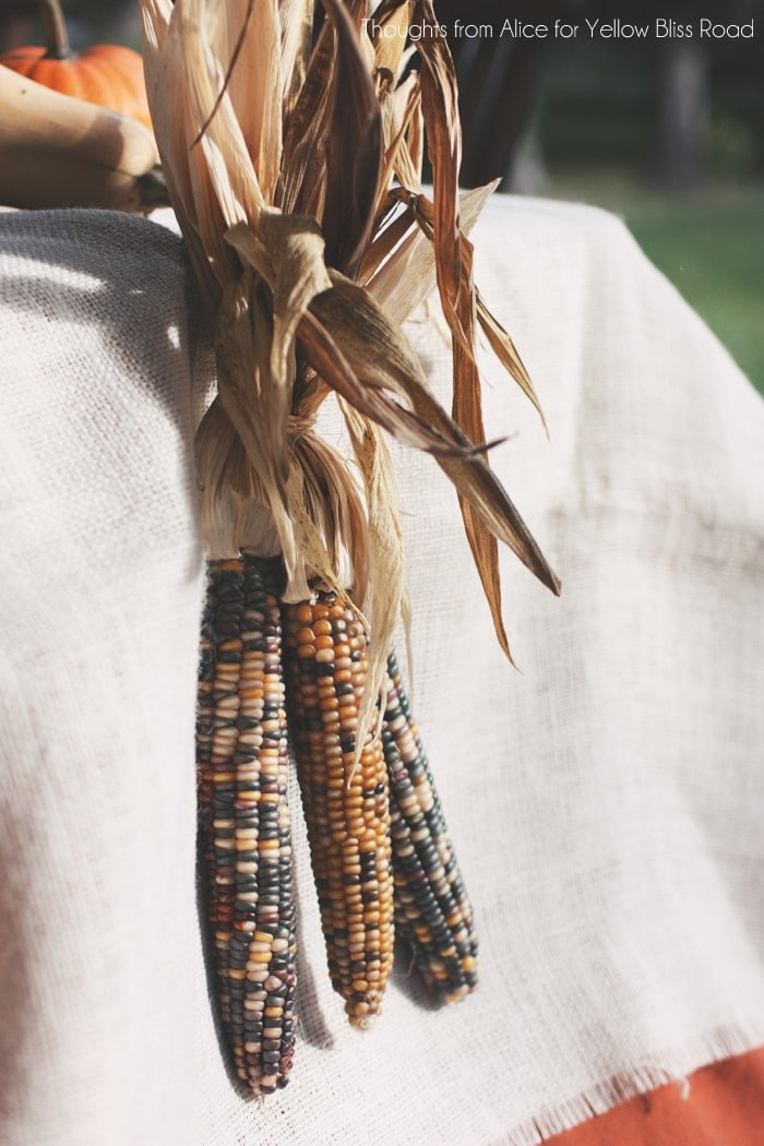 Indian Corn on Thanksgiving Table