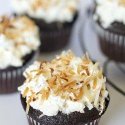 A close up of chocolate cupcakes