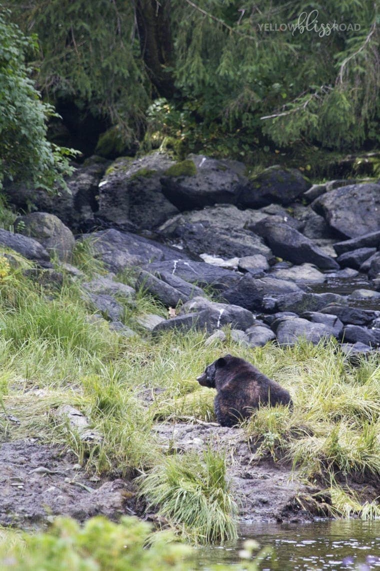 Disney Cruise Line Ketchikan Bear