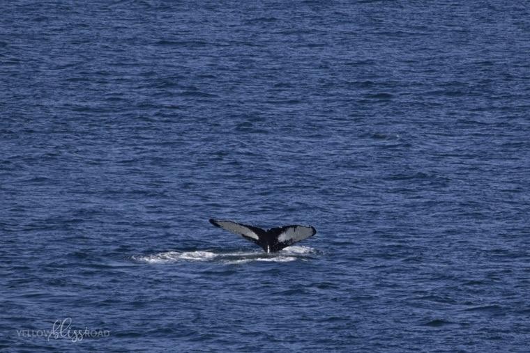 Disney Cruise Line Whale